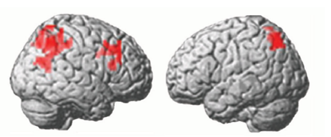 working memory capacity brain