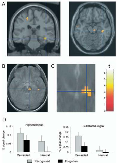 long term memory reward brain