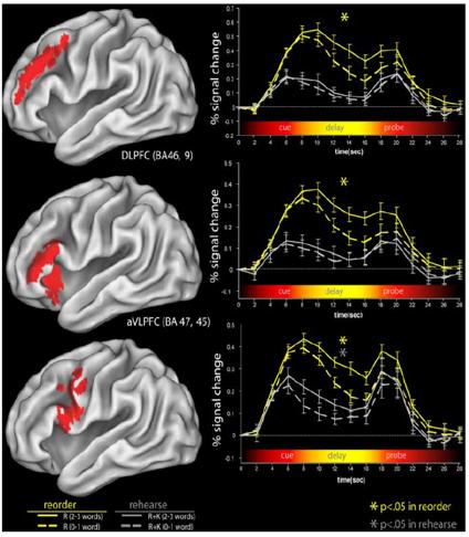 long term memory brain activation