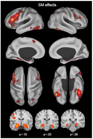 long term memory encoding brain