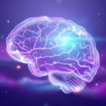 long term memory brain