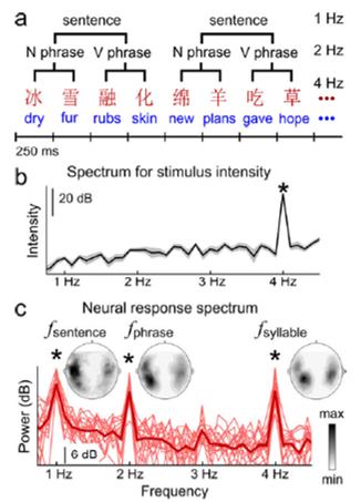 rhythm brain word phrase sentence EEG
