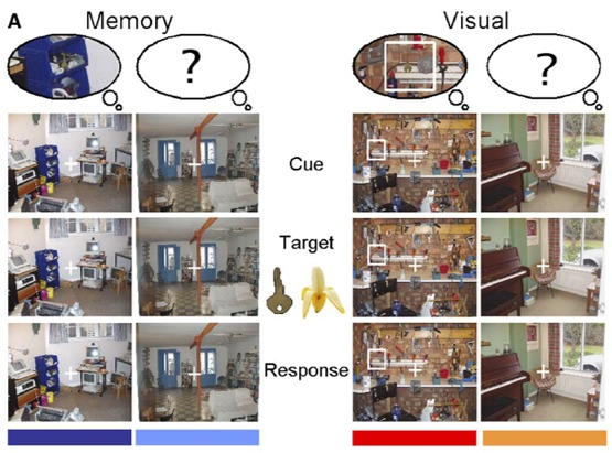 memory search and visual search