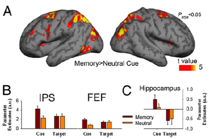 memory search attention brain