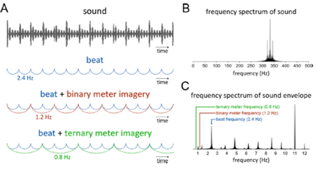 rhythm beat brain EEG