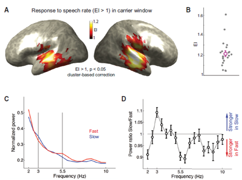 rhythm brain temporal EEG