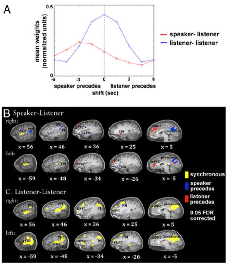 speech comprehension and production brain synchronization precedes