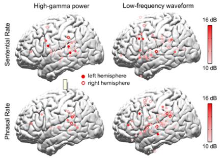 rhythm brain temporal