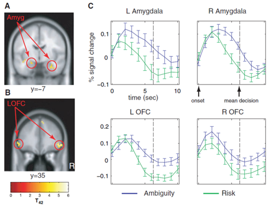 uncertainty decision making prefrontal and amygdala