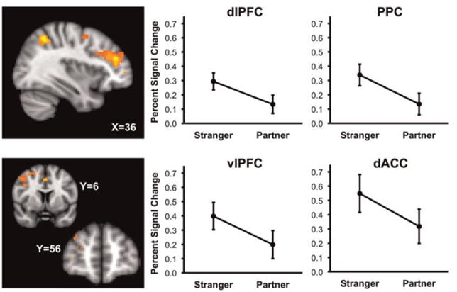 social ties brain prefrontal PCC stranger and partner