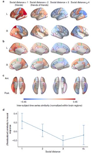social ties similarity brain