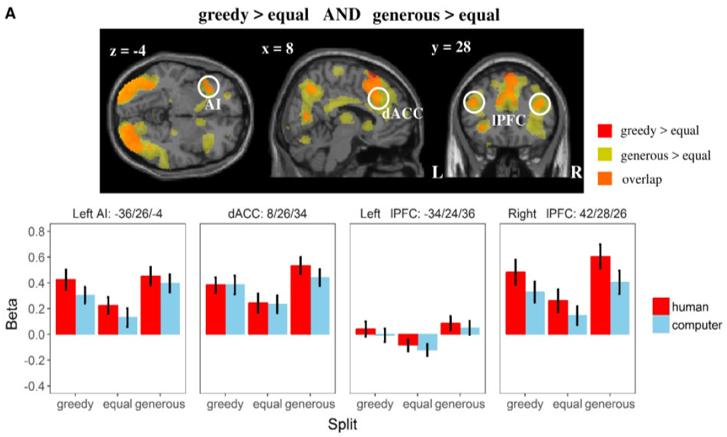 greed neuroscience brain activation AI prefrontal