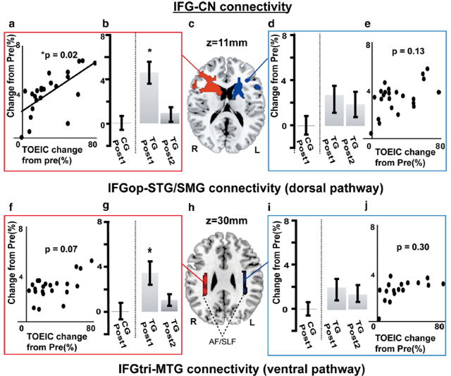 brain connectivity and TOEIC study performance vocabulary