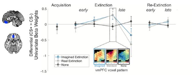 imagination brain application fear extinction prefrontal cortex