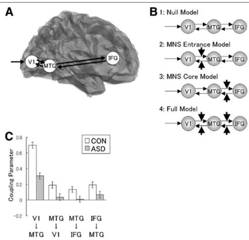 autism face emotion recognition brain connectivity